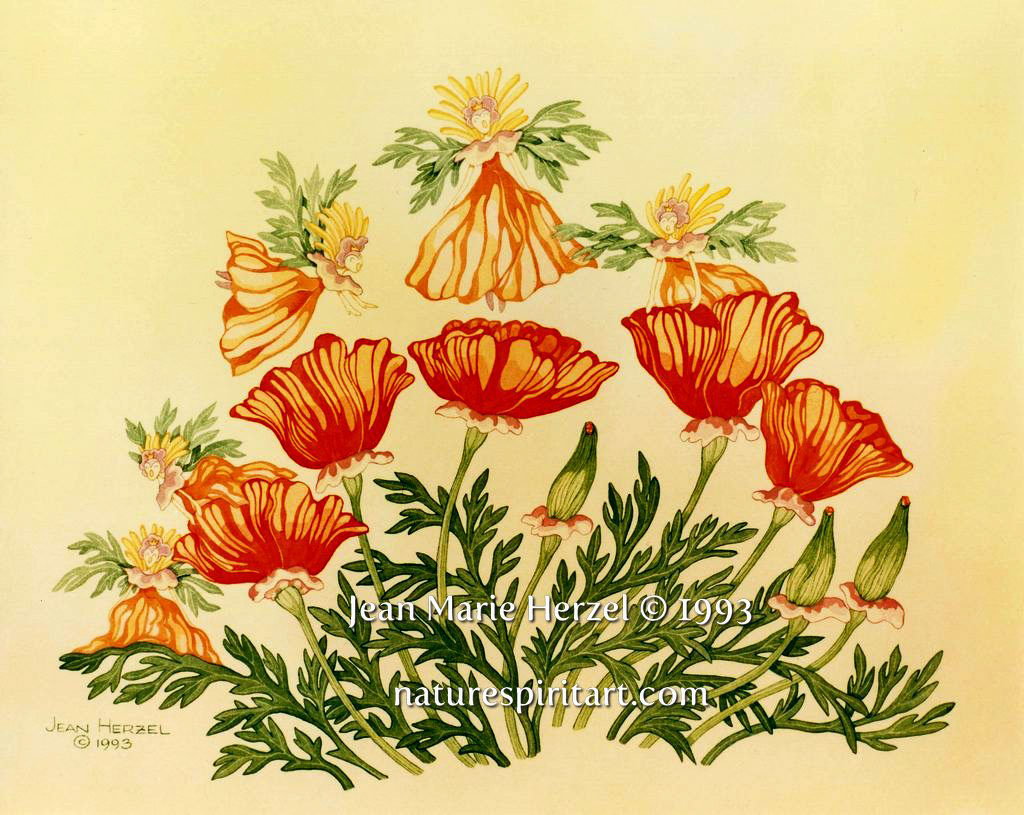 Poppy Fairies